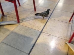 Footless Pigeon